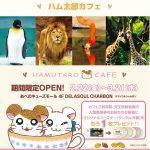 「天王寺動物園」と「ハム太郎カフェ」コラボ企画 動物園のあとはカフェにGO!