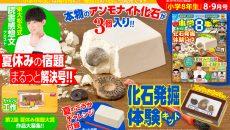 本物のアンモナイト化石を発掘体験できる!『小学8年生』8・9月号付録