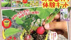 『小学8年生』10・11月号本誌で農業や野菜、話題のニュースに詳しくなる!!