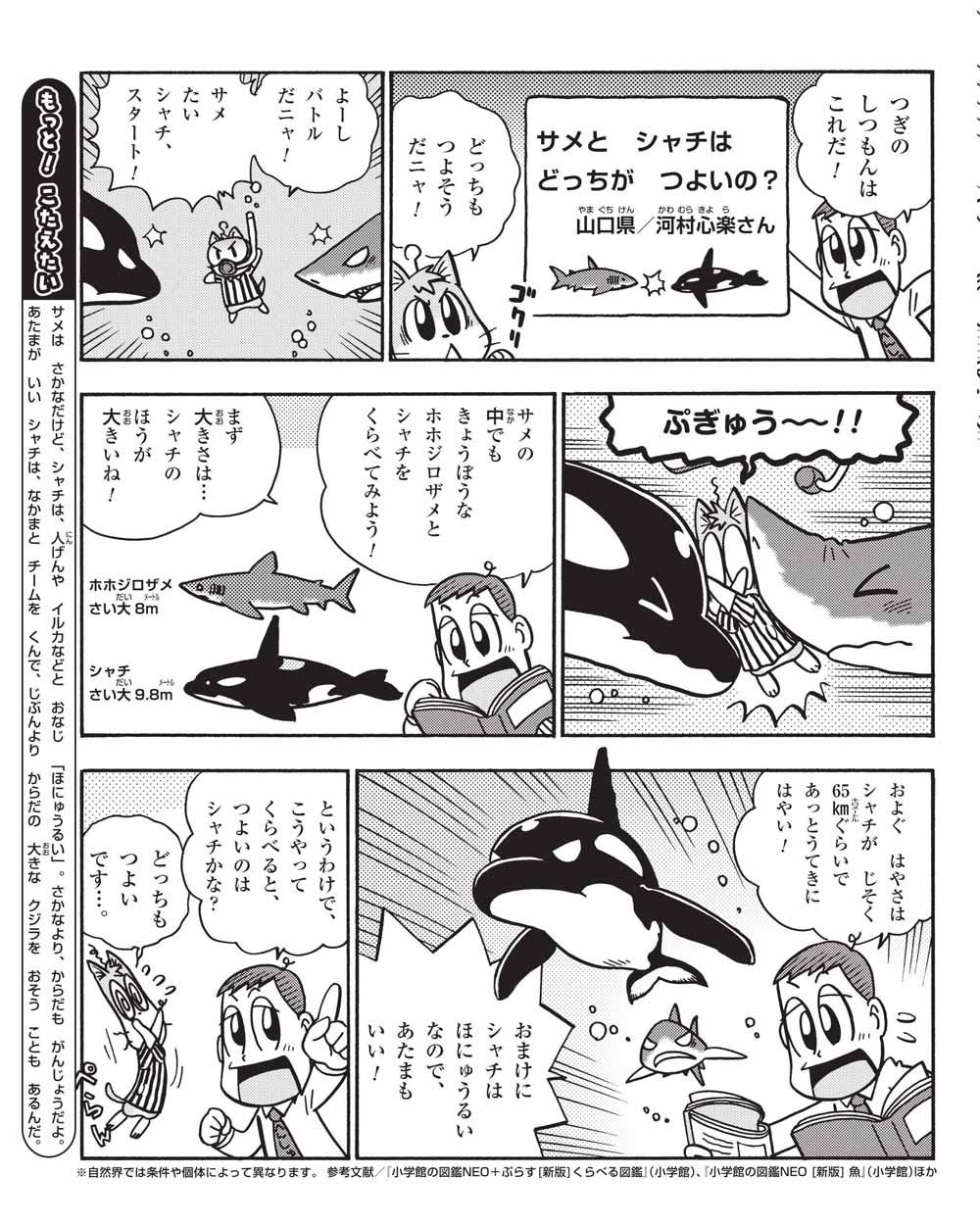 木の上の丸いものはなんですか? サメとシャチはどちらがつよいの? ほか 2コマ目