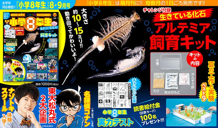 『小学8年生』8・9月号付録で〝生きている化石〟アルテミアの飼育にチャレンジ!